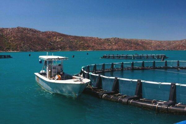 Fish Farming Tank Liner Suppliers